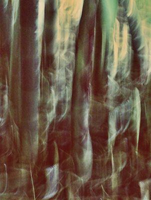 bamboo..