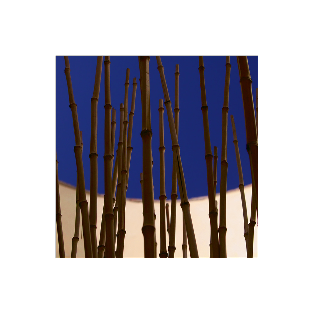 Bamboo vs. blue