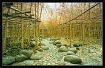 Bambooforrest