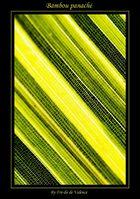 Bambou panaché