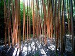 Bambouseraie d'Anduze 2