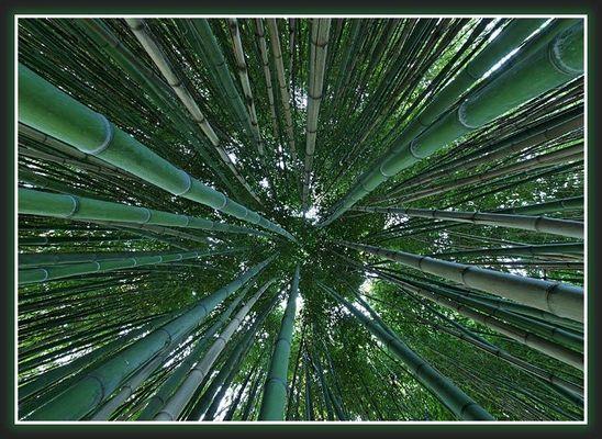 Bambus 16mm Ansicht