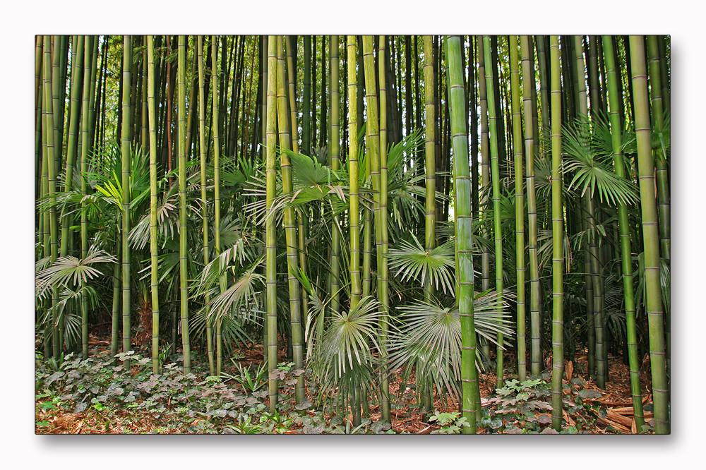 Bambus das Holz des 21. Jahrhunderts