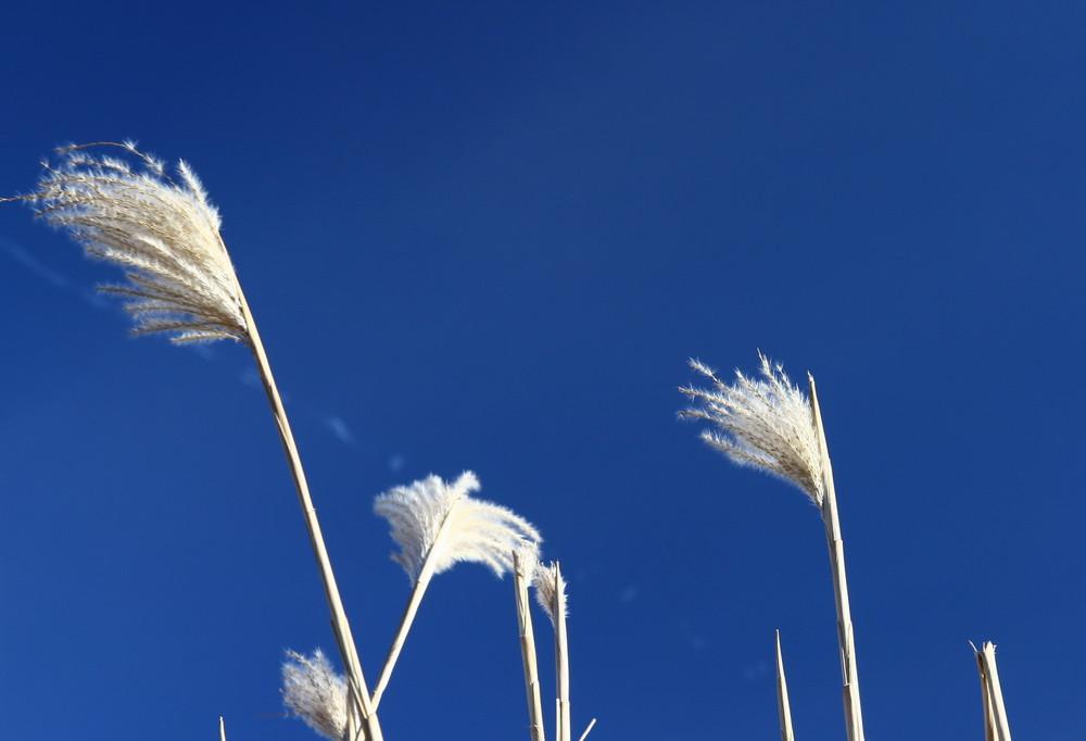 ...Bambus im Wind...