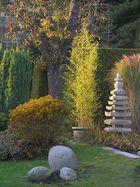 Bambus, von der Sonne bestrahlt!