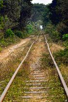 Bambusbahn I