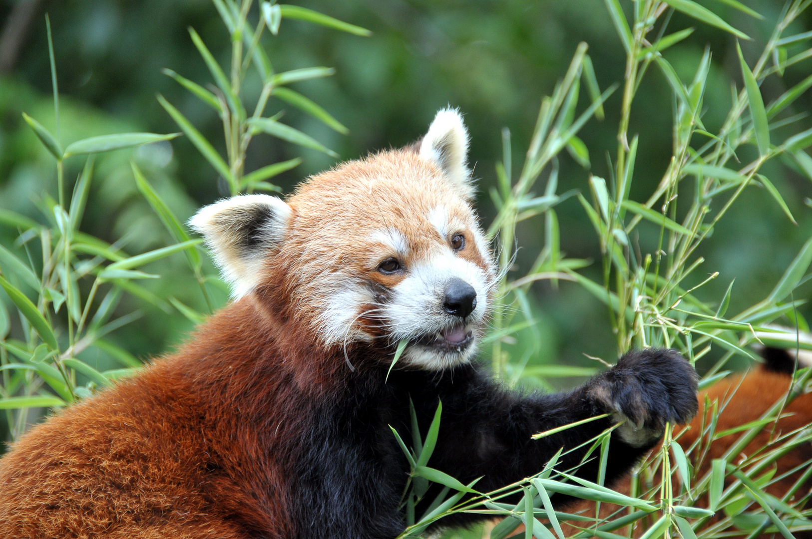 Bambusmahlzeit