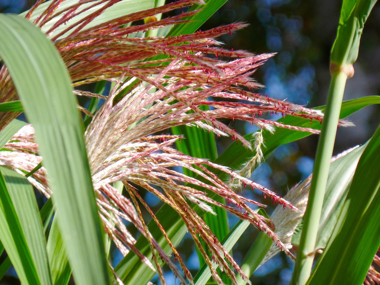 bambuspuschel