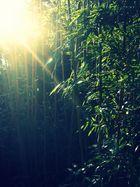Bambustraum