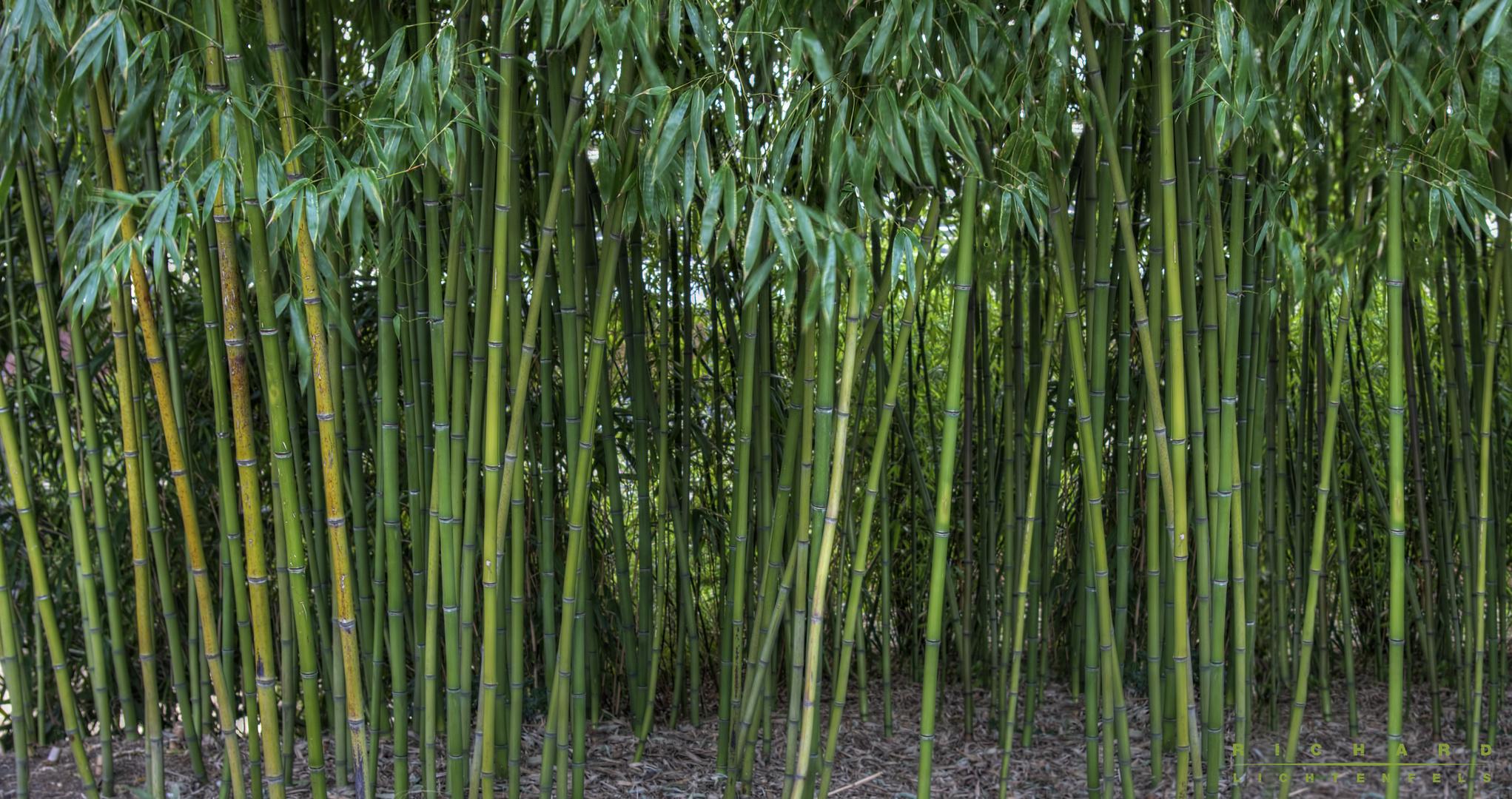 Bambuswäldchen