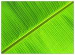 Banane - São Tomé e Príncipe