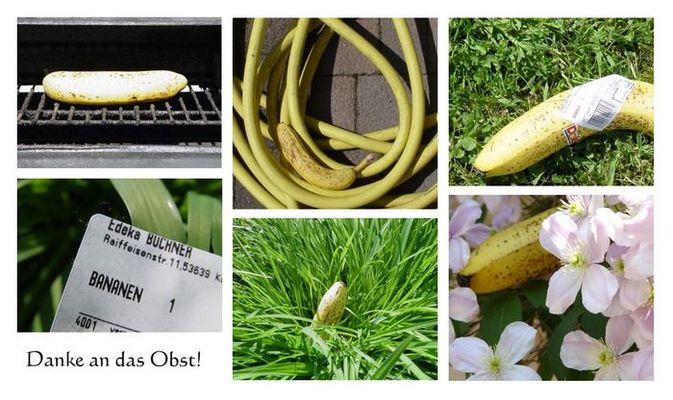 Bananen erobern die welt