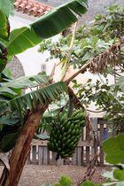 Bananen im Klostergarten