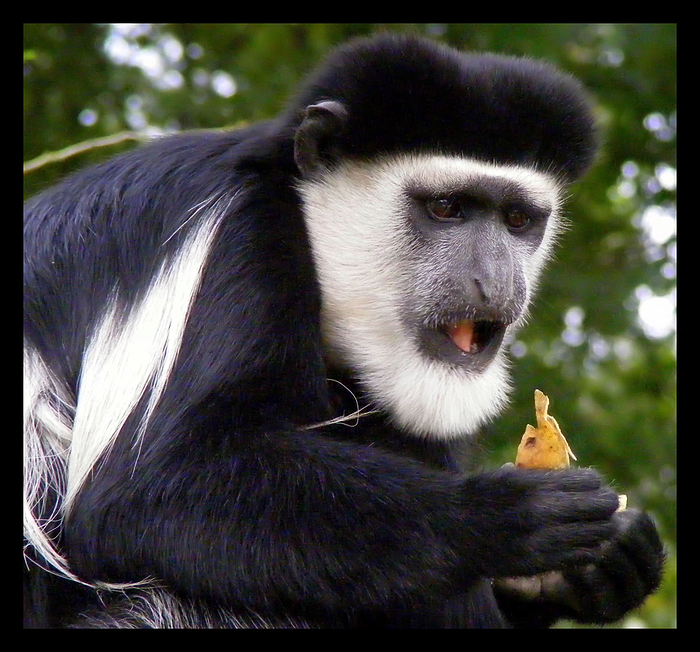Bananen sind gesund !!!