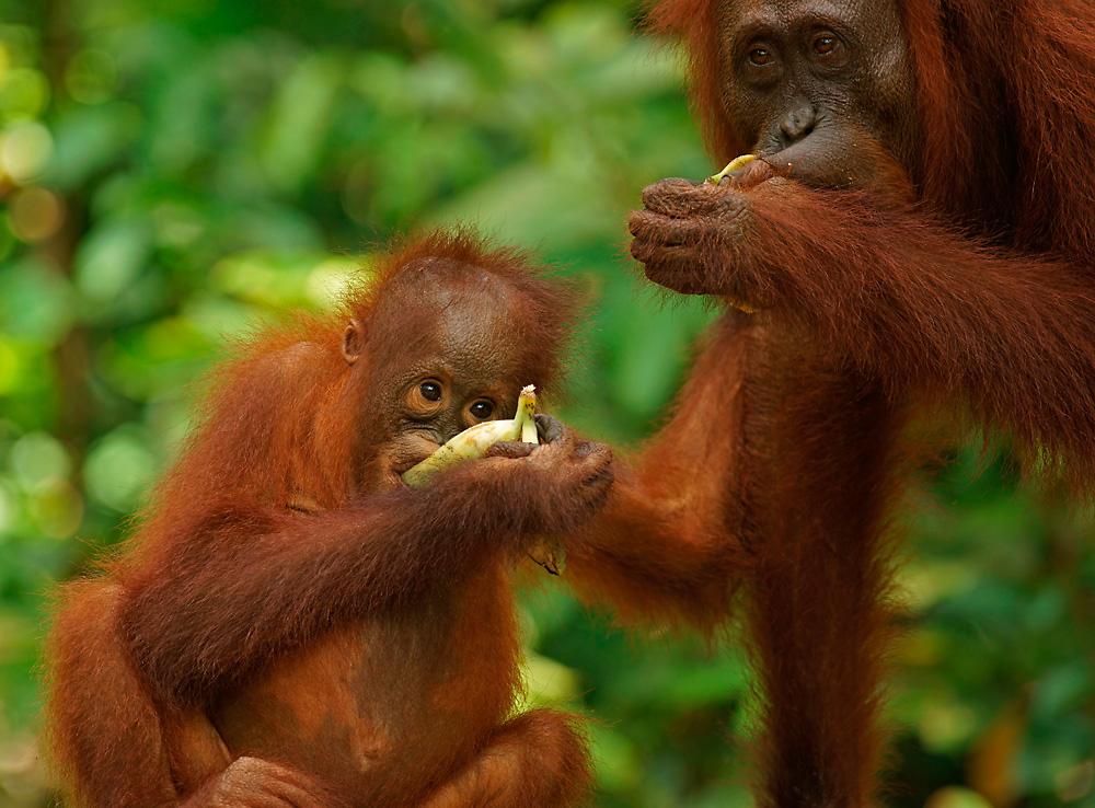 Bananenfrühstück