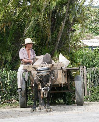 Bananenverkäufer auf dem Rückweg