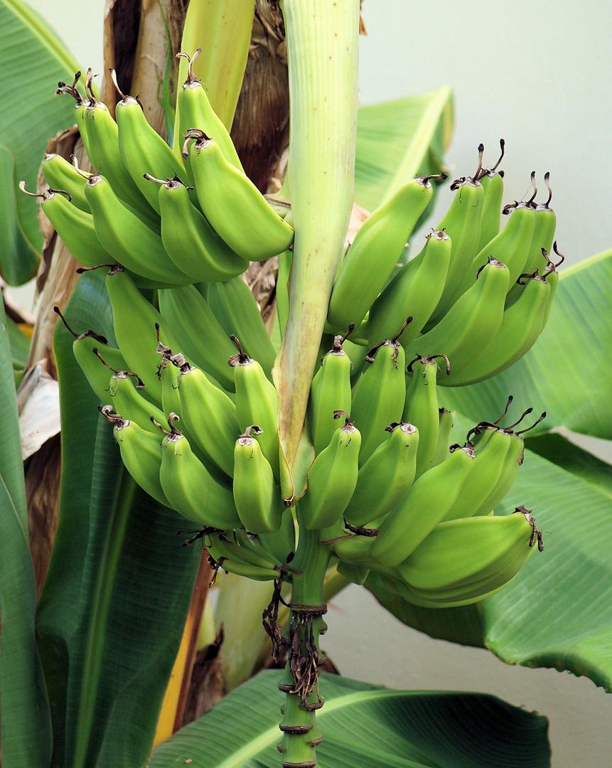Banannnnnaaaa