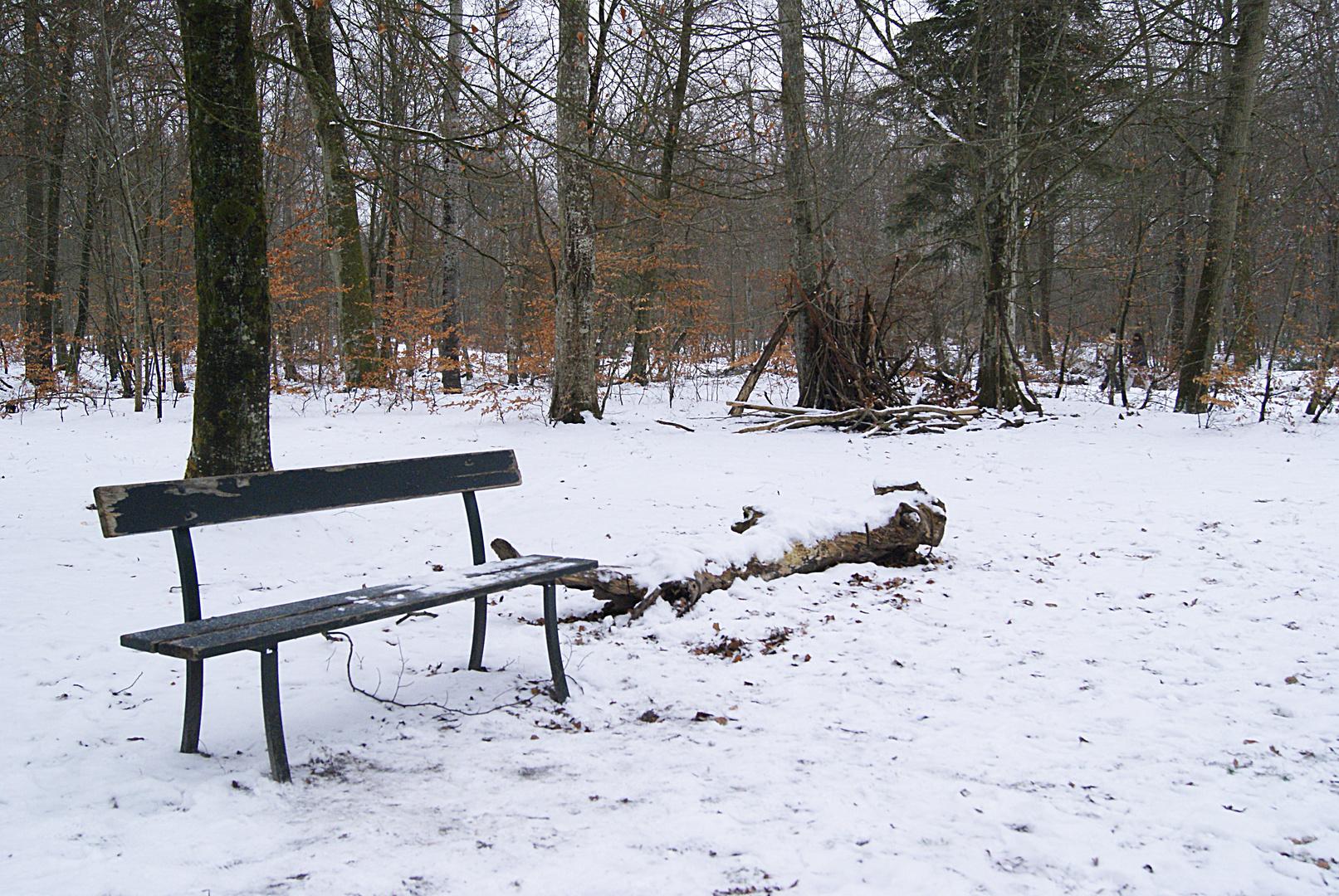banc en forêt de fontainebleau