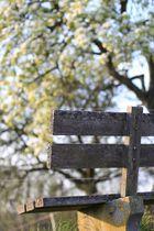 Bank an den Kirschbäumen