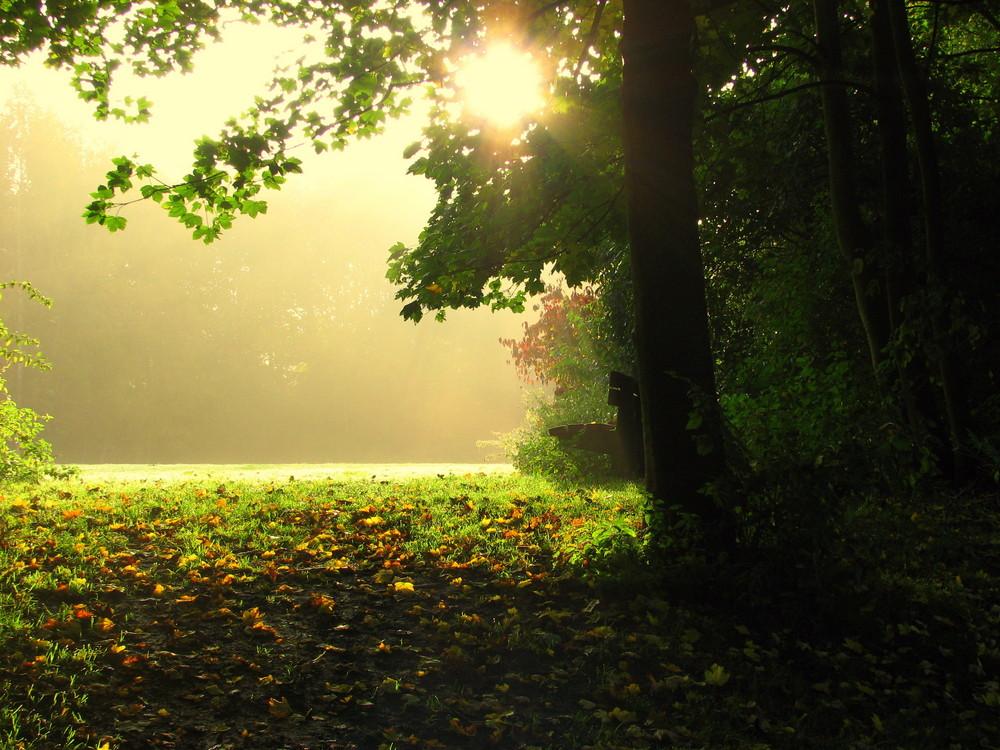 Bank im Herbstwald