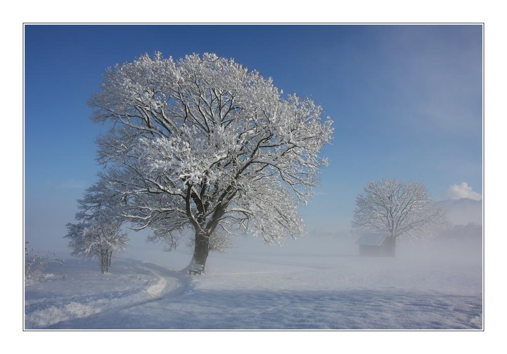 - Bank unter dem Baum II -