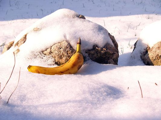 Bannane trifft Winter