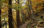 Bannwald