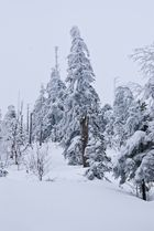 Bannwald - Wintertour
