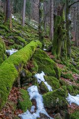 Bannwald zwischen Hirsch- und Zweribach im Schwarzwald