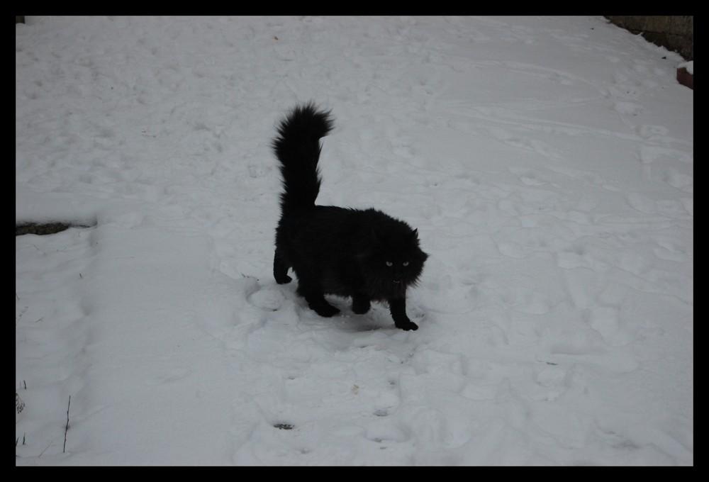 bao dans la neige