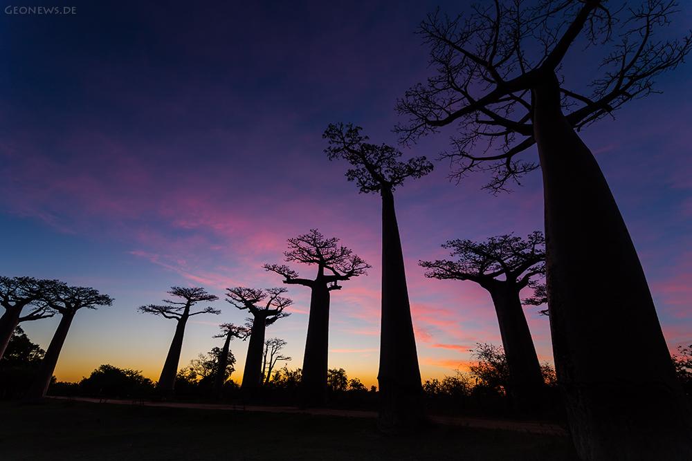 Baobab - Allee