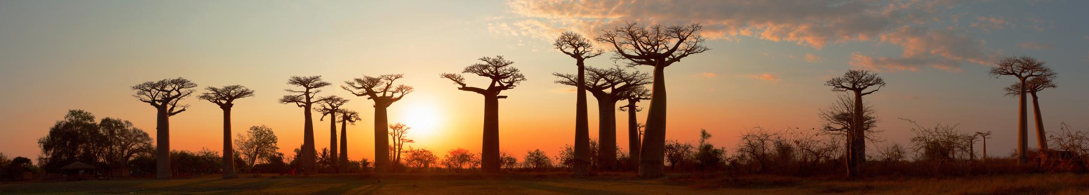 Baobab Allee-Panorama