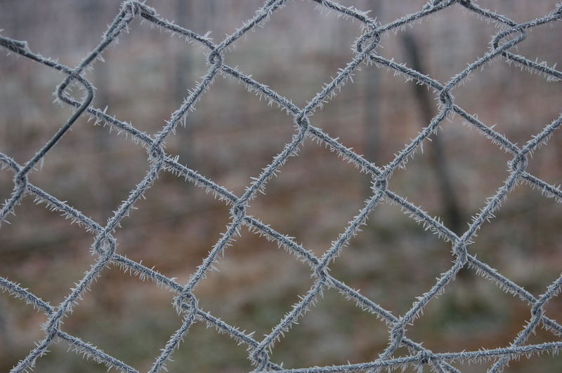 Barbwire in winter