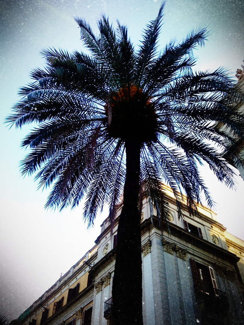 Barcelona Lomo 1