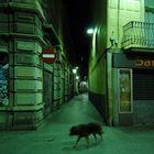 Barcelonight