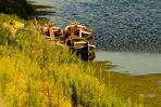 Barche sull'Arno