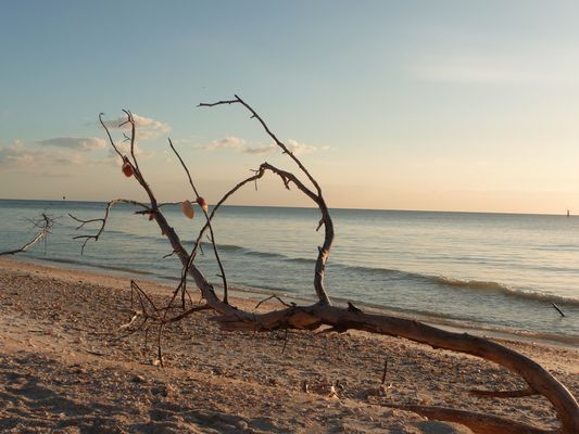 Barefoot Beach, Florida
