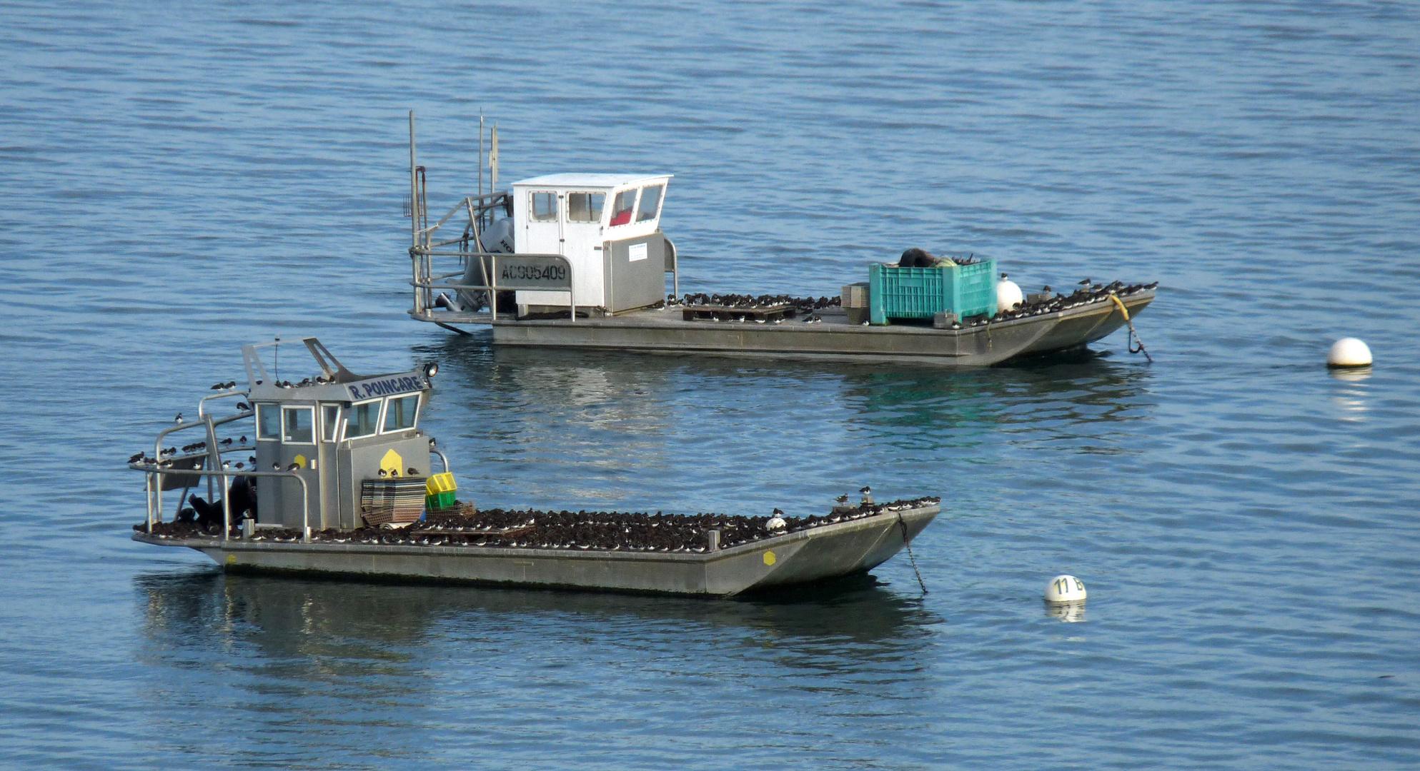 Barges ostréicoles ...