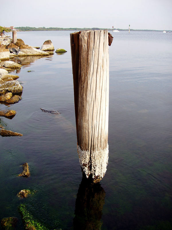 Barnacles on Post