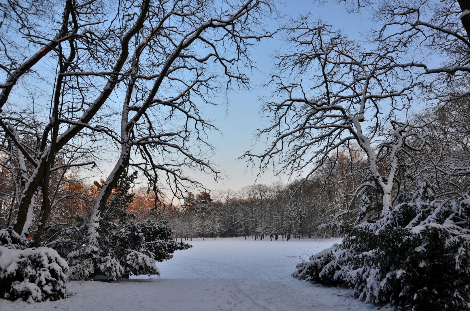 barnstorfer wald im winter