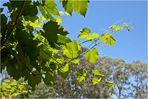 Barossa Wein