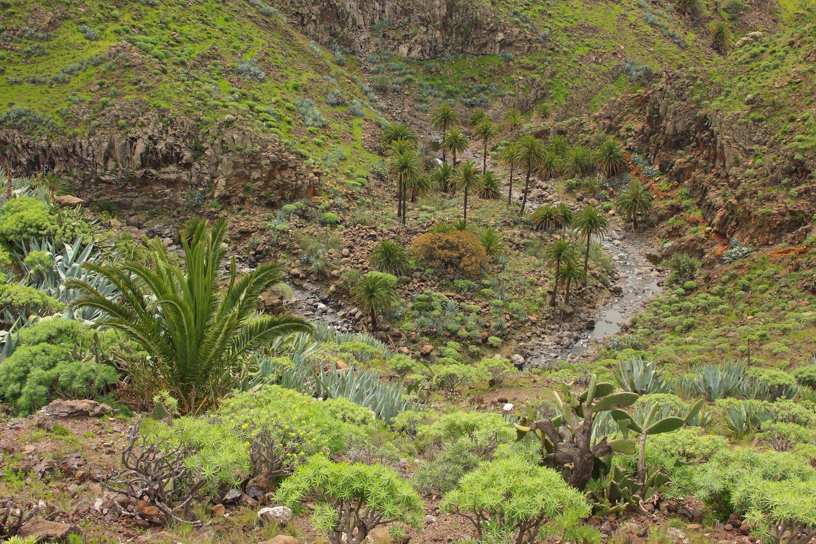 Barranco de Matanza