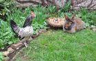 Bartkaninchen 06: Ostern