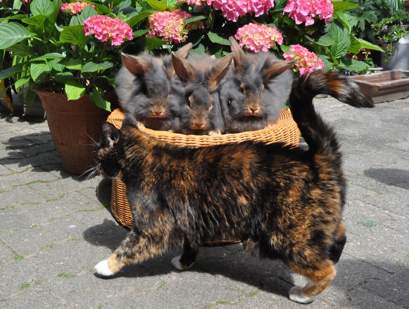 Bartkaninchen 19: Katze