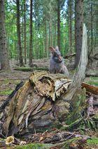 Bartkaninchen 21: Wald