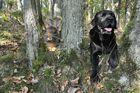 Bartkaninchen 23: Wald