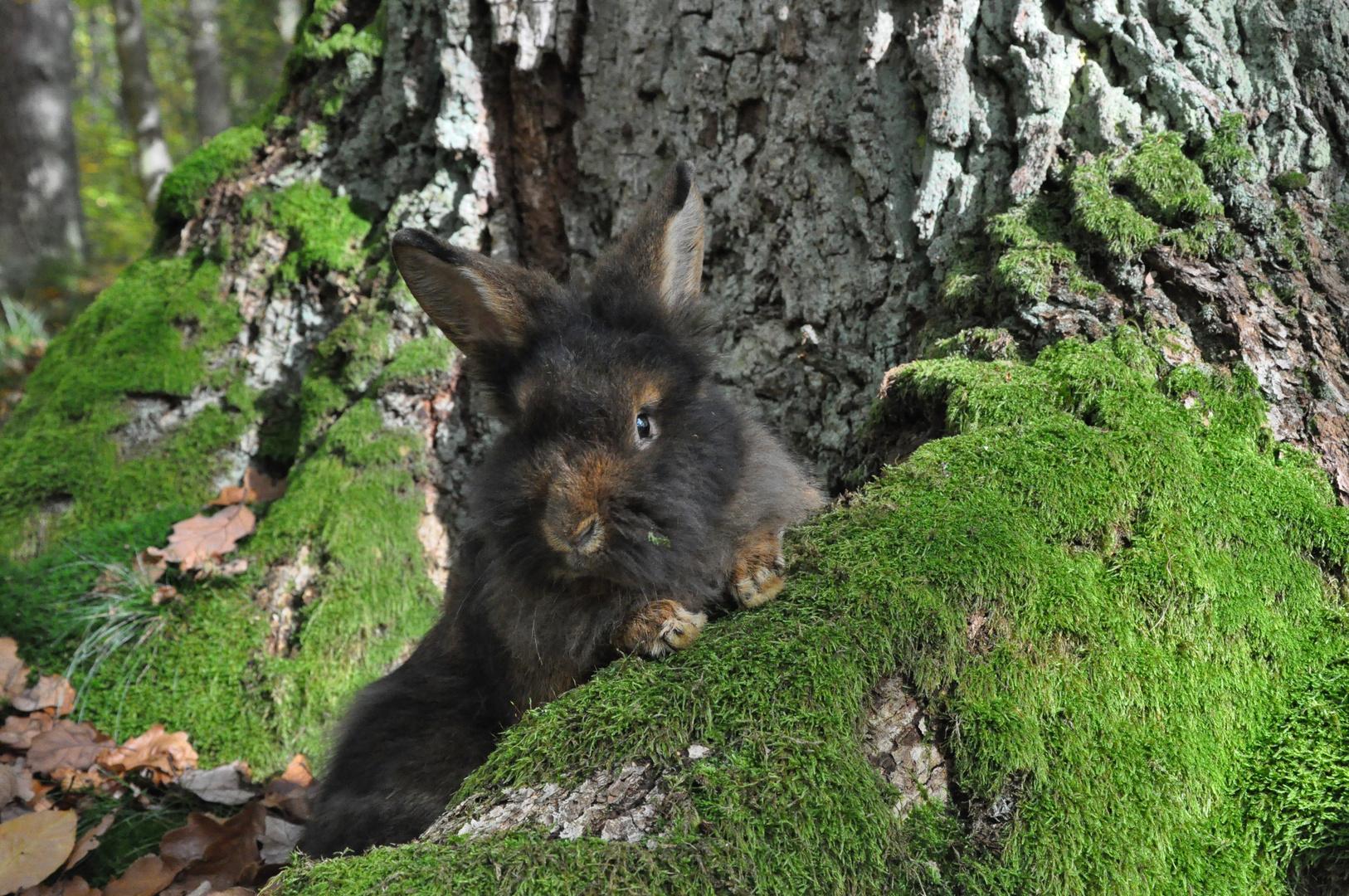 Bartkaninchen 25: Wald