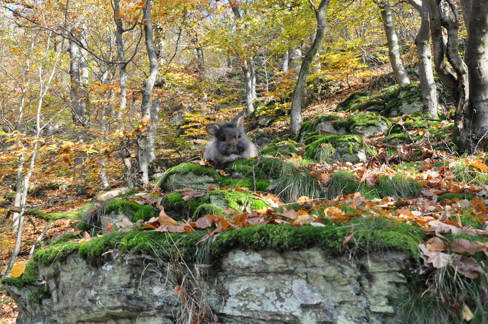 Bartkaninchen 26: Wald