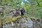 Bartkaninchen 28: Wald