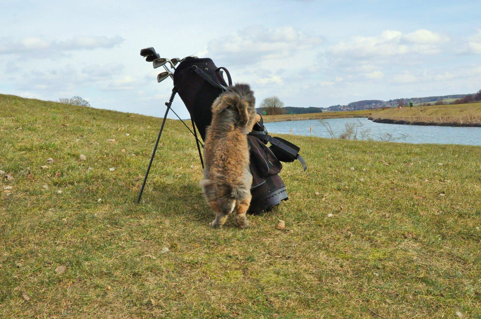 Bartkaninchen 31: Golfplatz
